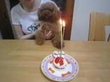 6月23日生まれのソフィちゃん