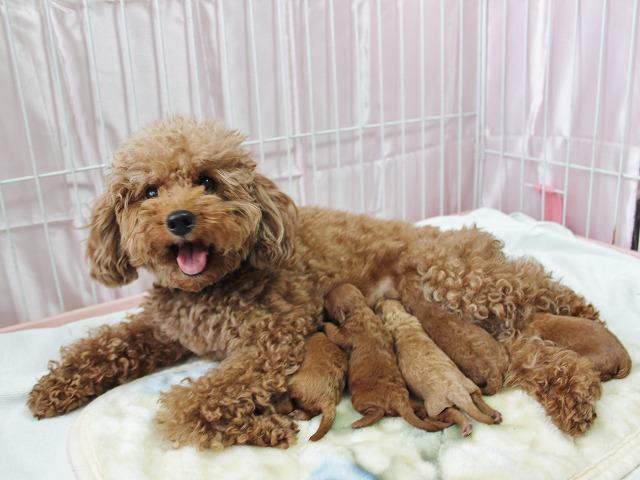 gumi_puppy