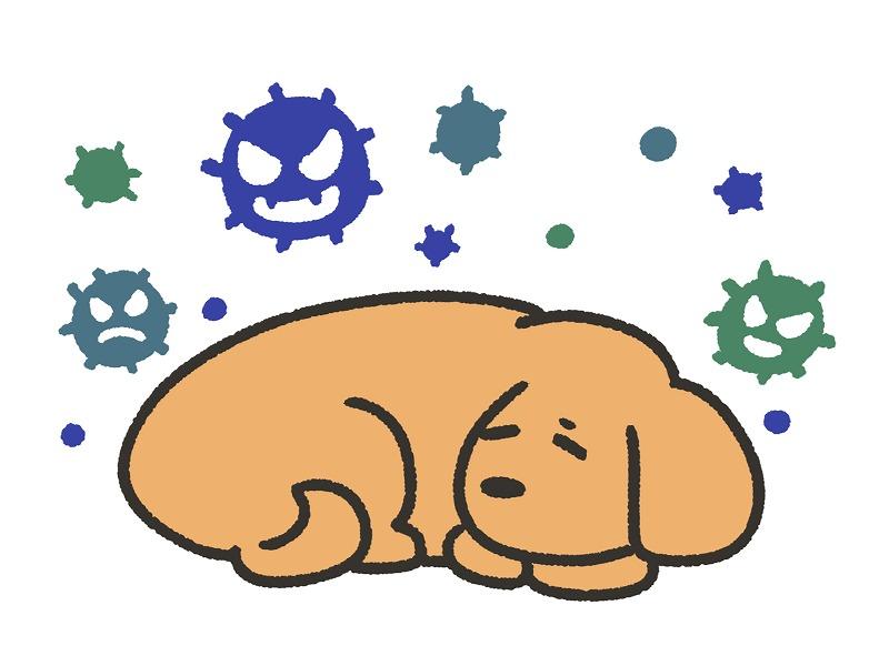 犬とコロナウイルス