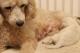 子犬8週齢規制